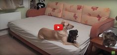 [VIDEO] Ever Wonder What Dogs Do While Waiting For You?