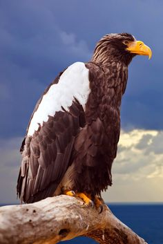 Google+Bird Photography