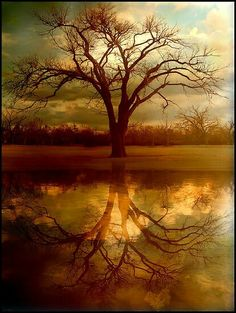 This is a photo of my favorite tree in town at Zink Park in Tulsa Oklahoma…the reflection and water was created using Photoshop and I also did some color manipulation as well as a soft texture layer to give it a tranquil overall feel. / 5038 views as o Tree Photography, Landscape Photography, Photography Tips, Photography Courses, Beautiful Nature Photography, Portrait Photography, Beginner Photography, Photography Studios, Ocean Photography