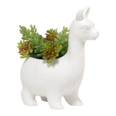 Buy Kikkerland: Lloyd the Llama Planter online and save! Kikkerland: Lloyd the Llama Planter Bring an extra does of cute to your plant collection! This mini leak-proof ceramic planter is the perfect additio. Small Cactus, Cacti And Succulents, Small Garden Birds, Beauty Blender Set, How To Feng Shui Your Home, Glass Planter, Ceramic Plant Pots, Garden Tool Set, Foliage Plants