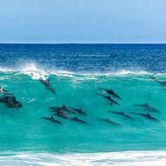 Dolphins, Marina di Castagneto Carducci, Italy