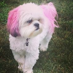 Get a new school year look with #PetExpressions colors at PetSmart. (IG photo credit: @lindseyholland24)