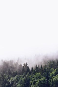 Cloudy forest 2 wallpaper from Happywall wallmurals wallmural wallpapers wallpaper fog happywall 842454674027509859 Foggy Forest, Misty Forest, Forest Mountain, Natur Wallpaper, Wallpaper Backgrounds, Forest Wallpaper Iphone, Wall Wallpaper, Forest Poster, Poster Photo