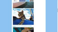 Bolt et Keel, la fratrie de chats errants sauvée des poubelles qui suit ses héroïnes à travers le monde - Web - Wamiz