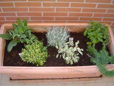 Piante aromatiche - Aromatic plants