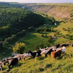 This is probably my favorite place in #Moldova. Quiet and peaceful, it always gets me.  Trebujeni, Orheiul Vechi