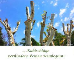 ... #Kahlschläge verhindern keinen #Neubeginn !