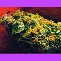 actingstrains:    Online Cannabis College! As seen in High Times Magazine!
