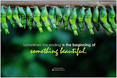 Symphony of Love Sometimes the ending is the beginning of something beautiful - http://www.fitrippedandhealthy.com/symphony-of-love-sometimes-the-ending-is-the-beginning-of-something-beautiful/  #Supplements #Fitness #Weightlosstips #DietTips