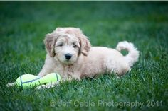 Photographing Pets – How to Get Started         http://improvephotography.com/2695/pet-photography-tips/