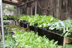 Lettuce, cabbage & greens #WabashFeed