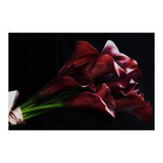 Luscious calla lily bouquet #sydney #wedding #bouquet #flowers #dark #flowerlove #florography #floragraphica