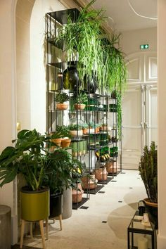 Indoor Plants Displayed On A Shelving System Are Tipped To Be One Of The Gest Trends For Plant Display In