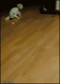 Perfecting red dot-getting strategy. | The 29 Most Cat Things To Ever Happen