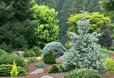 Conifers create a medley of year-round color in the garden.