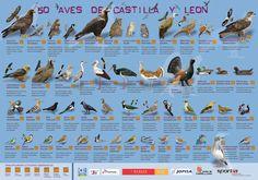 #Malaria #Aviar en las #Aves acuáticas de #Castilla y #León   Un estudio liderado por investigadores de la Universidad Europea Miguel de Cervantes (UEMC) de Valladolid ha determinado que el 40 por ciento de las aves acuáticas analizadas en ríos de Castilla y León   http://laoropendolasostenible.blogspot.com.es/2014/09/malaria-aviar-en-las-aves-acuaticas-de.html
