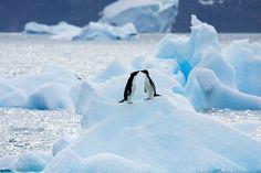 Cold Kiss:  Browns Bluff, Antarctic Peninsula, Antarctica