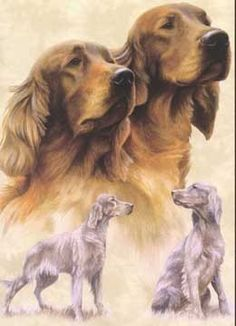 Irish Setter Art. I would love to own this.
