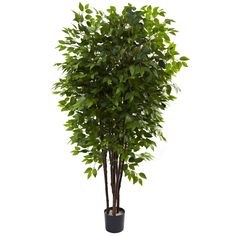 Nearly Natural Nearly Natural Deluxe Ficus Tree in Pot & Reviews | Wayfair