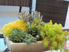 Succulent dish garden I created this spring.  It is doing very well