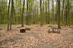 Awenda Provincial Park Ontario Canada Ontario Parks, Country Roads, Canada, Plants, Image, Flora, Plant, Planting