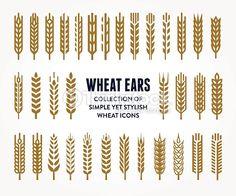 rye grain illustration - Google Search