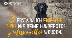 3 erstaunlich einfache Tipps wie Deine Hundefotos professioneller werden
