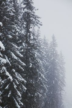 I Love Winter, Winter Fun, Winter White, Apocalypse, The Secret History, Wattpad, You Are Amazing, Fantasy, Pretty Pastel