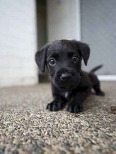Hello! Here is a cute puppy!
