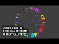 Science Vignette: A Cellular Taxonomy of the Visual Cortex