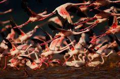 lake-nakuru-flamingos-9