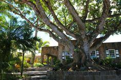 Nevis: Day 2 (Part 2) - Andi Perullo de Ledesma, My Beautiful Adventures.