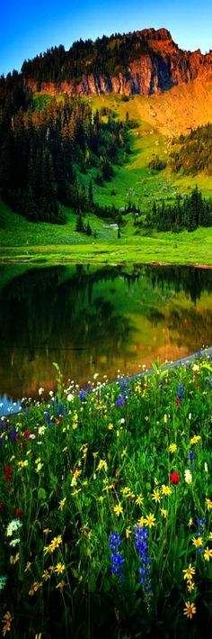 Mount Rainier , Washington, United States: - holidayspots4u