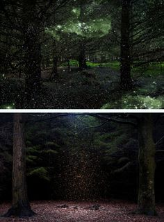 "In ""Stars,"" photographer Ellie Davies layers forest photos with images taken by the Hubble Space Telescope."