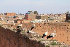 Rooftop storks in Marrakech