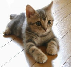 I love cute cat pictures. Here is cutest cat breeds in the world with funny fact cat cat cat are cool cats so cute cat ever Kittens And Puppies, Cute Cats And Kittens, Baby Cats, Kittens Cutest, Small Kittens, Pretty Cats, Beautiful Cats, Animals Beautiful, Cute Baby Animals