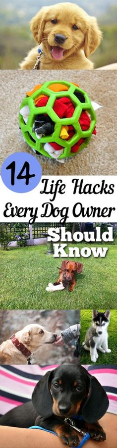 14 Life Hacks Every Dog Owner Should Know - Dog Hacks, Dog Owner Hacks, Life Hacks, Tips and Tricks, Pet Tips and Tricks, Controlling Pet Hair, How to Control Pet Hair, Dog Owners, Pet Hacks, Pet Care, Dog Care Tips and Tricks, Popular Pin