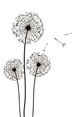 #dandelion clocks #time