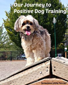 Positive #DogTraining Reaps Rewards, Love, and Happiness: