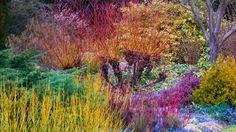Winter, Cambridge University Botanic Garden, Cambridge, England (© Harpur Garden Library/Corbis) | 1 Photo 1 Day