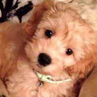 Kingzley - Dog of the Week Candidate - PuppyDogSwag.com | Repin to Vote!