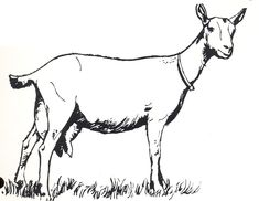 Goat Clipart to Download ClipartCow goat Goat art