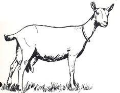 goat line drawings | Animals / Goat_Line_Art