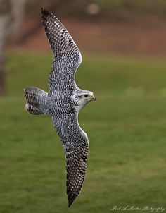 i <3 Falcons