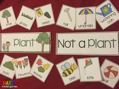 Plants kindergarten - Plants Print & Play Pack What is a plant and not a plant Plants Print & Play Pack – Plants kindergarten April Preschool, Preschool Garden, Kindergarten Science, Preschool Themes, Classroom Activities, Classroom Ideas, Plant Lessons, Creative Curriculum, Plant Science