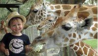 Giraffe Ranch - Tampa Attraction Giraffe Ranch 38650 Mickler Rd. Dade City, FL 33523 (813) 482-3400