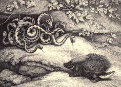 Samuel Howitt - A new work of animals - 1811