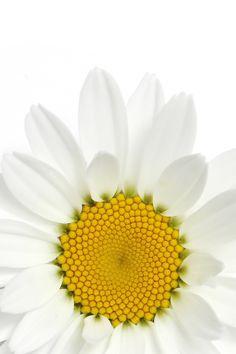 daisy (mary jo hoffman)