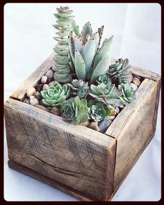 48 Awesome Repurposed Succulent Planters Ideas 48 Awesome Repurposed Succulent Planters Ideas - Succulents are perfect plants for dry gardens and are easy to root and grow. Once you learn how easy it is to propagate succulent plants, it Succulent Planter Diy, Succulent Cuttings, Succulent Centerpieces, Propagating Succulents, Succulent Gardening, Plant Cuttings, Succulent Arrangements, Diy Planters, Planting Succulents