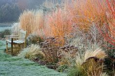 Woodpeckers, Warwickshire, winter: frosted border with sedums, grasses, a wooden bench, cornus winter flame and rubus thibetanus